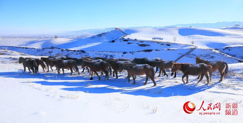 新疆江布拉克:白雪皑皑显美景