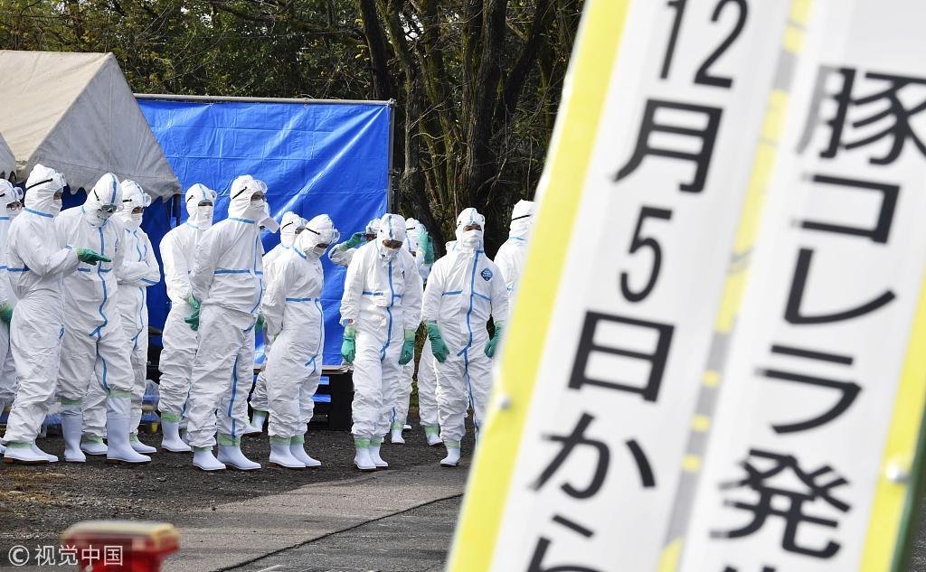 日本岐阜县再次发现猪瘟病毒 当地展开防疫工作