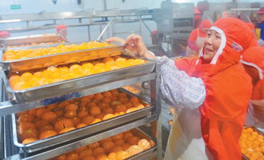 湖北秭归:柑橘加工助脱贫