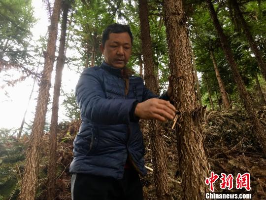 武陵山植绿人刘洪喜:10年绿化千亩荒山植树30余万株