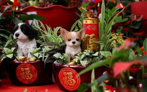 """中国侨网业者推出""""聚宝盆""""园艺盆景,适合摆设与送礼。(新加坡《联合早报》/严宣融 摄)"""