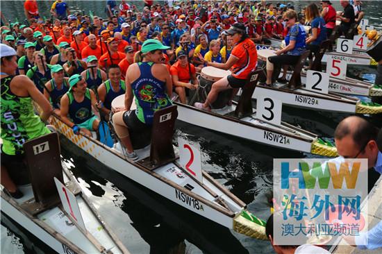 庆祝中国农历新年 悉尼龙舟赛火热开赛