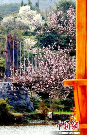 廊前延伸的桃树梨植映衬着水的流连。 奉力 摄
