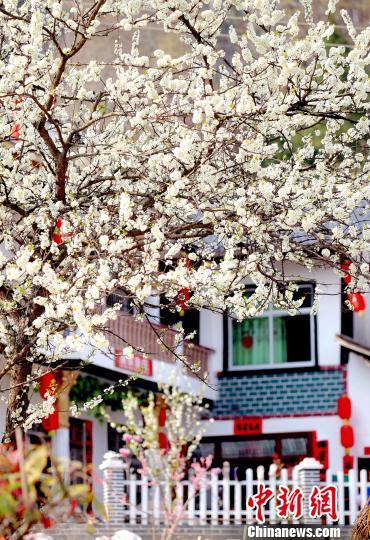 灯笼、对联、窗花和庭院内外的花卉映照生活的美好。 奉力 摄