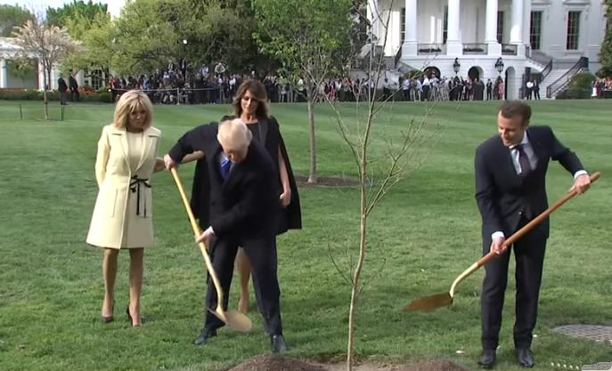 马克龙与特朗普在白宫一同种下了一棵来自法国的小橡树。