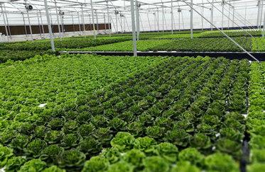 """内乡县""""中国-以色列田园综合体""""蔬菜基地。(梅淑娥 摄影).jpg"""