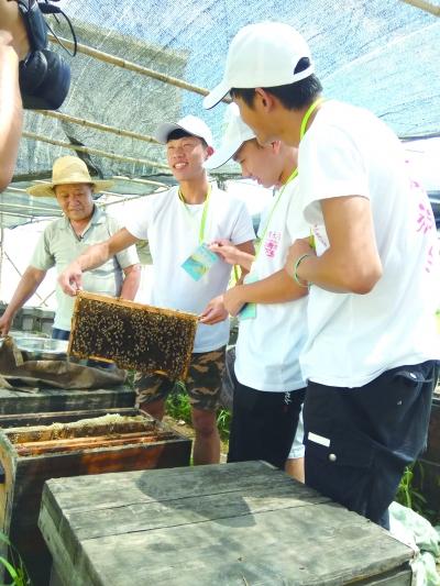 aa学习了解养蜂知识_b.jpg