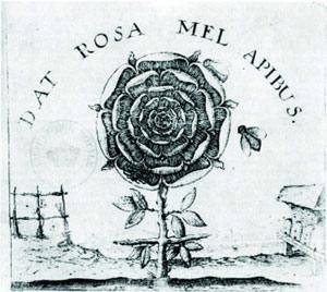 """叶芝与他的""""十字架玫瑰"""""""