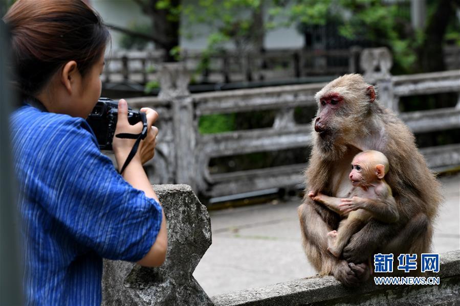 (生态)(1)福建武夷山:猕猴与人和谐相处