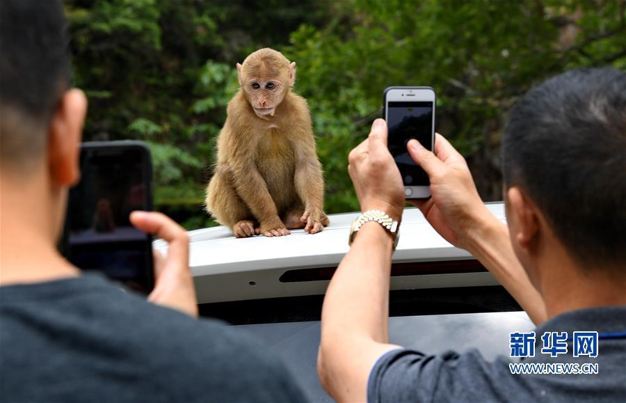 (生态)(2)福建武夷山:猕猴与人和谐相处