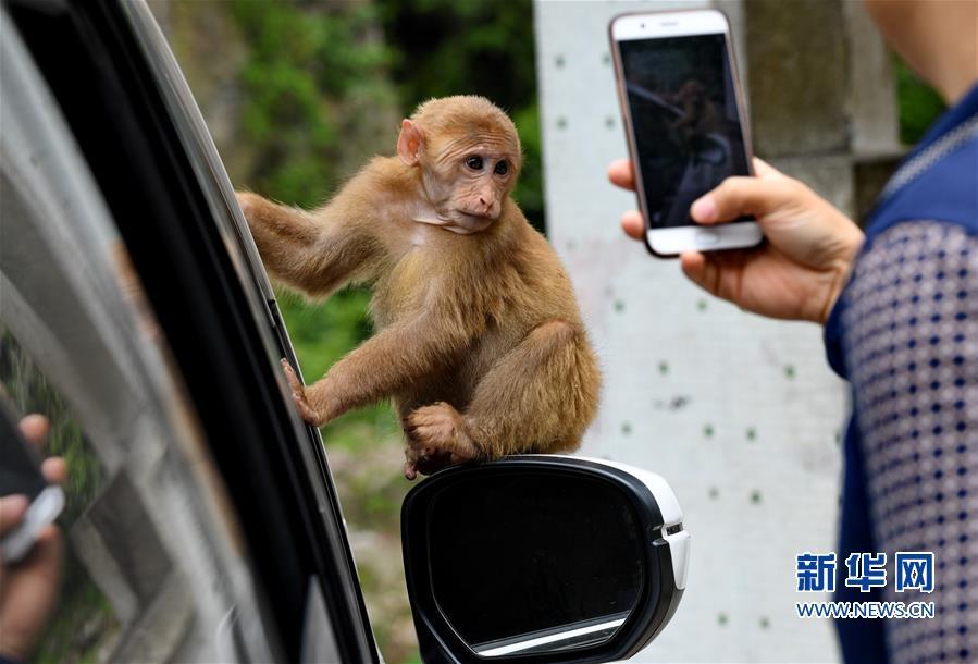 (生态)(3)福建武夷山:猕猴与人和谐相处