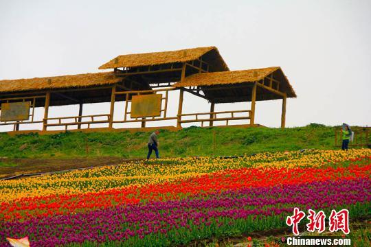"""""""五彩""""的山坡,游人犹如走在花毯上。 王小军 摄"""