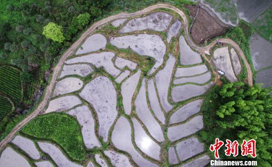 江西铅山举办首届稻作文化节再现传统农耕技艺