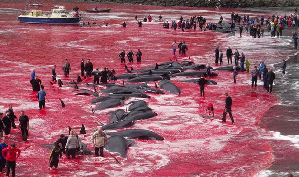 Whale-massacre-1004285.jpg