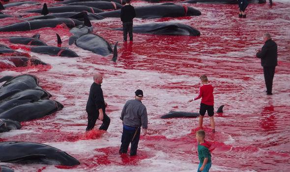 whales-1463969.jpg