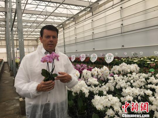 图为桑德介绍昆明基地培育的蝴蝶兰种苗 陈静 摄