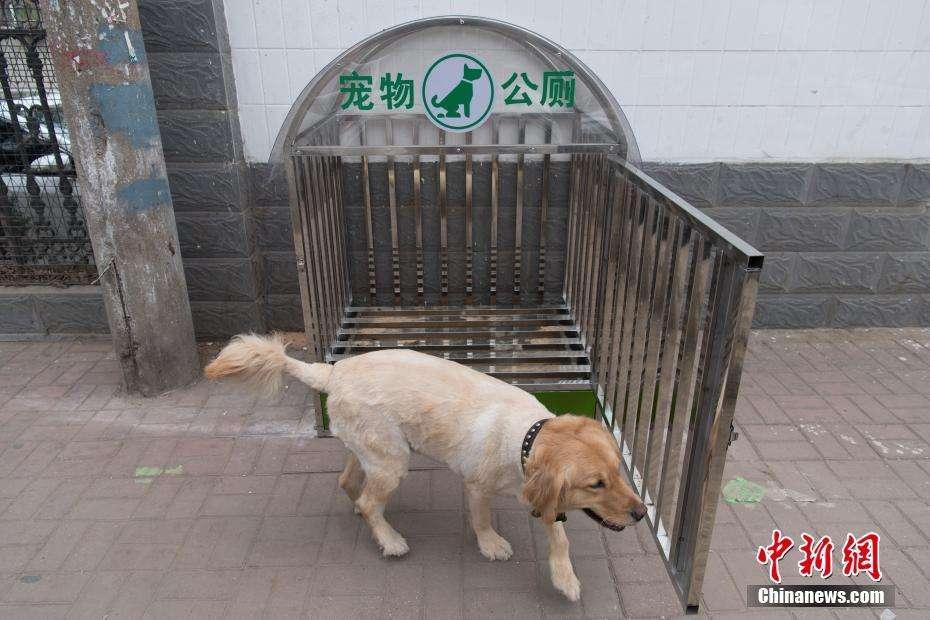 狗患人祸,何时能休?