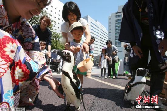 当地时间2018年8月27日,日本东京酷热持续气温达到35℃,品川王子大饭店水族馆在地面洒水降温,企鹅在街头享受沐浴。