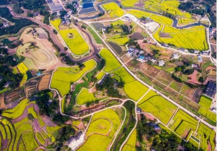 江小白助力重庆乡村振兴 打造农业特色小镇