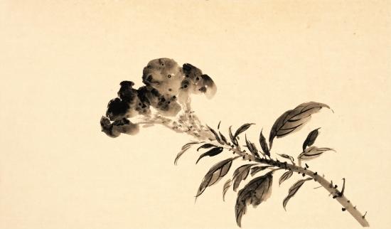 鸡冠花.jpg