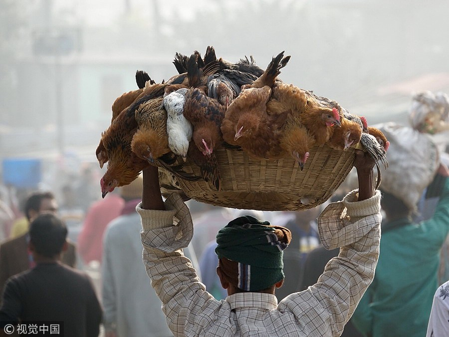 """实拍孟加拉人的""""神技"""":民众头顶重物出行"""