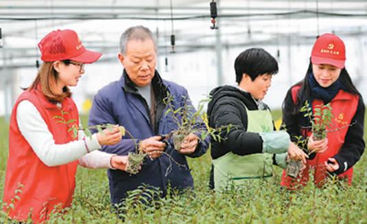 精准帮扶 助农创业