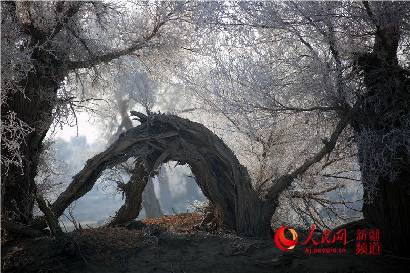 塔克拉玛干沙漠现雾凇景观