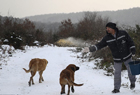 土耳其兽医为流浪狗投食