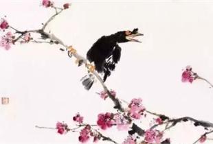 王雪涛的八哥画