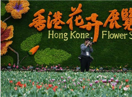 香港花卉展15日举行 全场展出42万株花卉