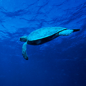 港科大发现7000多种新海洋微生物 有助研发新药