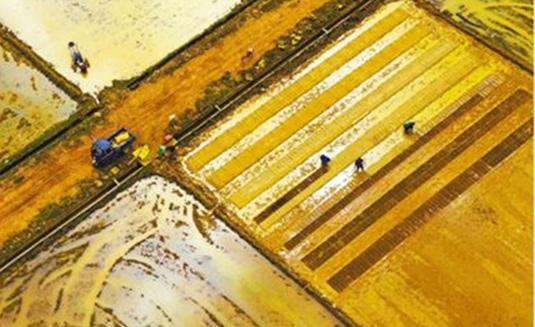 江西新余:水稻育秧正当时