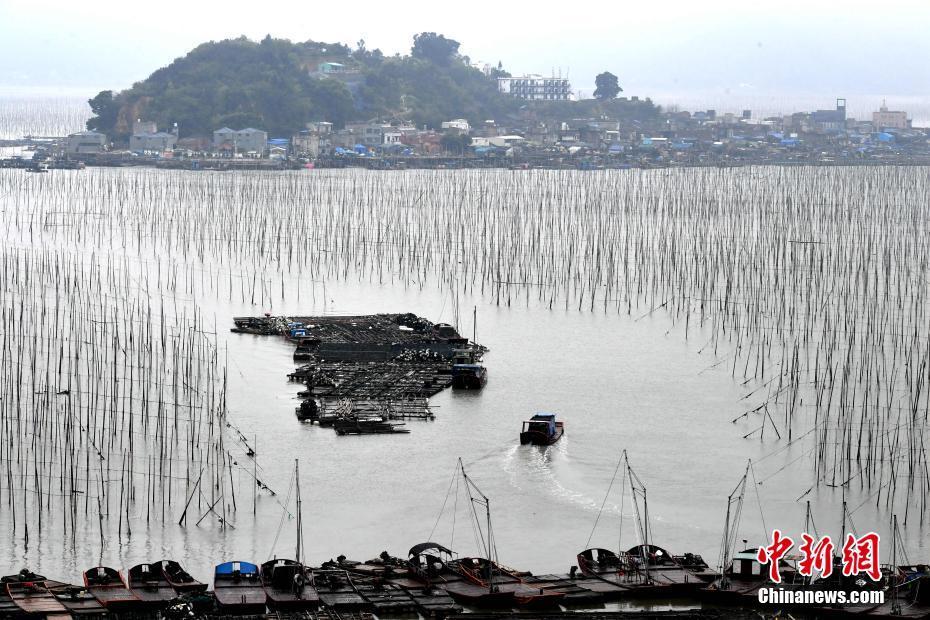 探访福建霞浦美丽渔村 石厝与海上养殖构成天然画卷