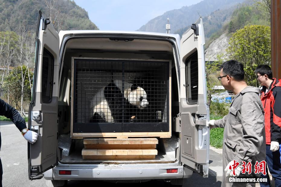 """大熊猫""""园园""""启程前往奥地利"""