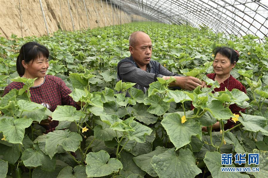 农技下乡助增收