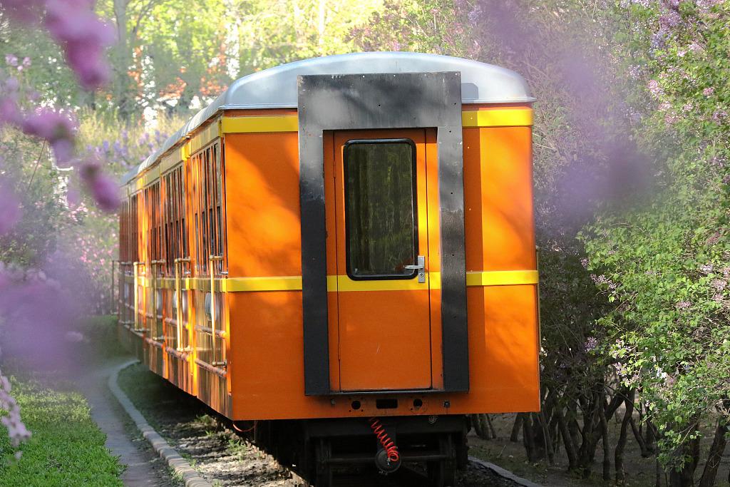 哈尔滨:鲜花盛开形成隧道 小火车穿越花海