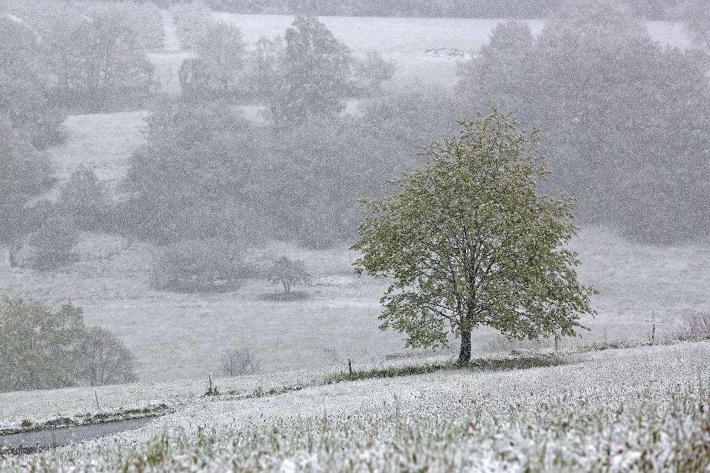 五月飞雪!德国遭遇冷空气侵袭