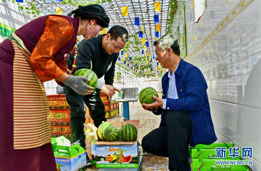 西藏白朗:多品种果蔬种植助力农牧民增收