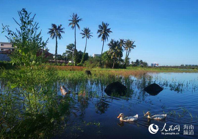 海口坡崖村湿地生态公园吸引众多游客观光