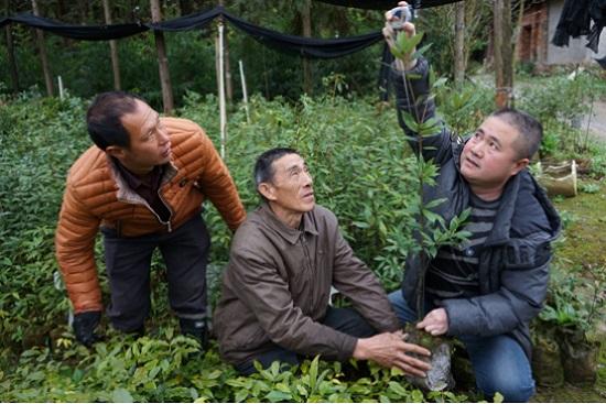 生态生财:福建建瓯践行绿色扶贫之路