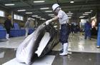 日本重启商业捕鲸