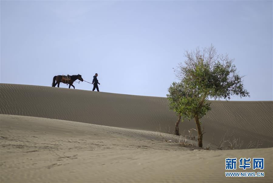 """守护""""沙漠英雄树"""""""