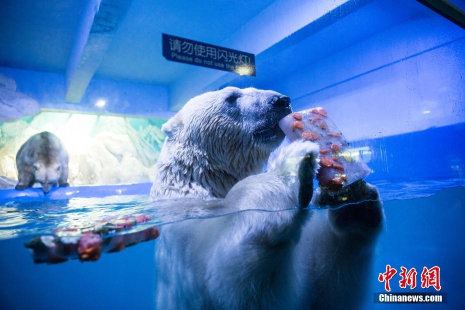 """躺冰床吃冰棍 海洋动物享""""高温福利"""""""