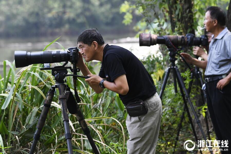 杭州:茅家埠水塘成鸟类天堂
