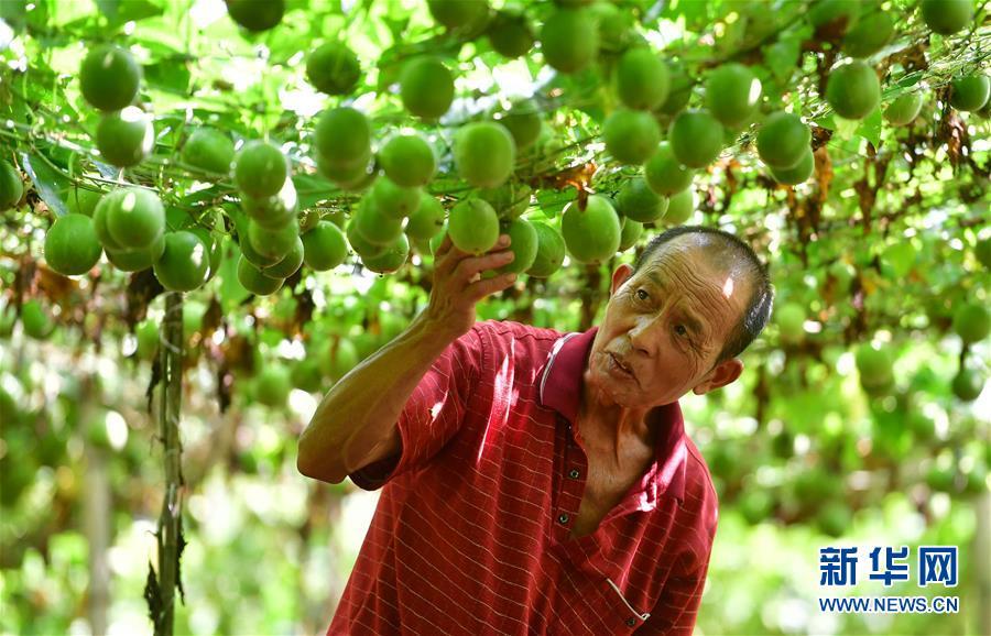 广西鹿寨:发展生态经济 助瑶寨脱贫致富