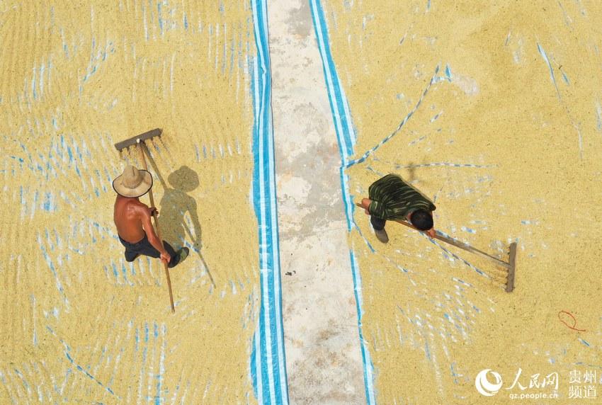 贵州玉屏:山区用上水稻收割机