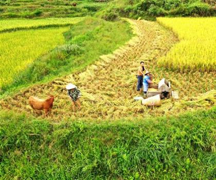 沿河农兴农场让中界精米香飘山外