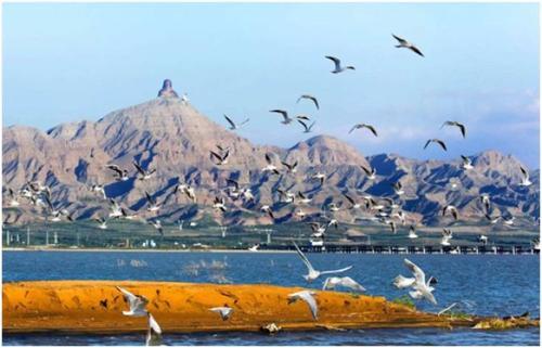 记住内蒙古乌海!在这里,沙漠里看海