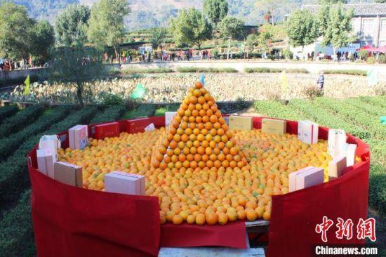 图为橙山展示。 林榕生 摄