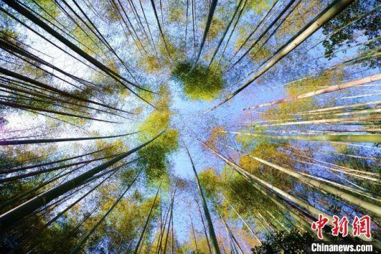 保护区内茂密的竹林。 王东明 摄